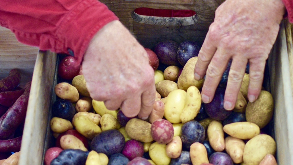 hands of a customer picking out potatoes in a crate