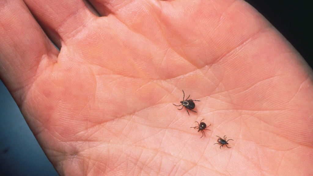 three ticks on a person's hand