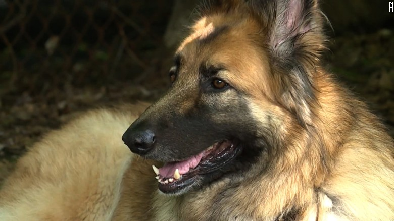 Hero dog saves family from burning home