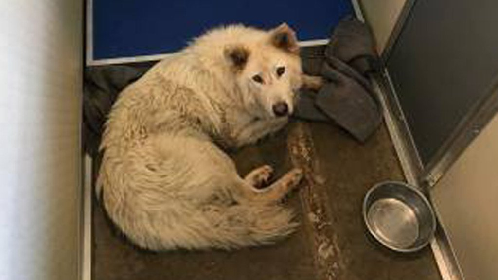 Possible wolf captured in Janesville