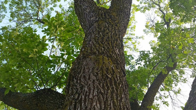 City officials approve $1M forestry fee to fight EAB