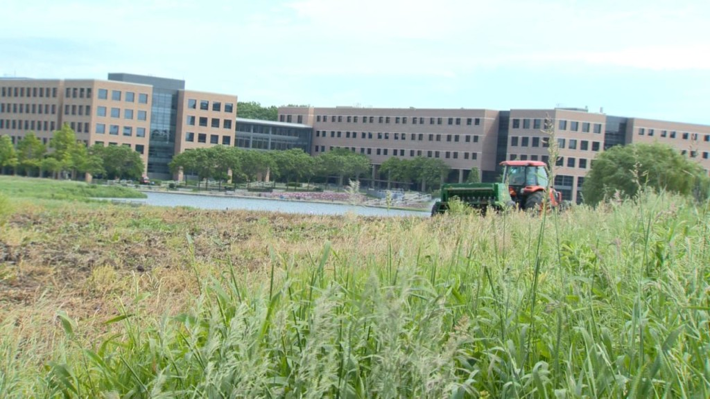 American Family Insurance to reintroduce native Wisconsin prairie plants at headquarters