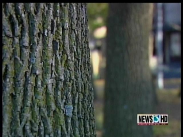 Madison takes action to prevent emerald ash borer