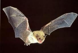 Bat tests positive for rabies in McFarland