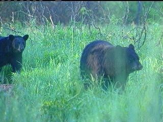 Sand Island closed overnight due to bear activity