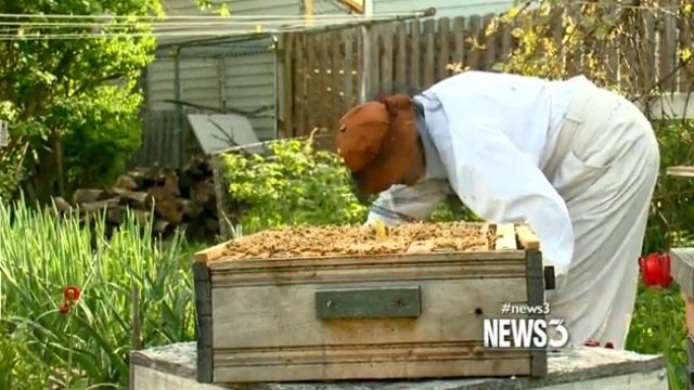 Honey bee population doing better, beekeepers still concerned
