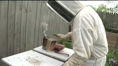 Beekeeping: Not just for rural areas anymore