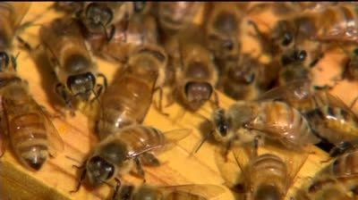 Beekeepers losing bees, income