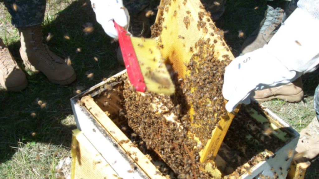 Classes teach Madisonians how to keep backyard bees