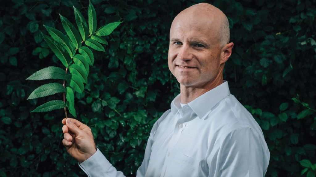 Big Idea: Using plant leaves as scaffolding to grow human cells