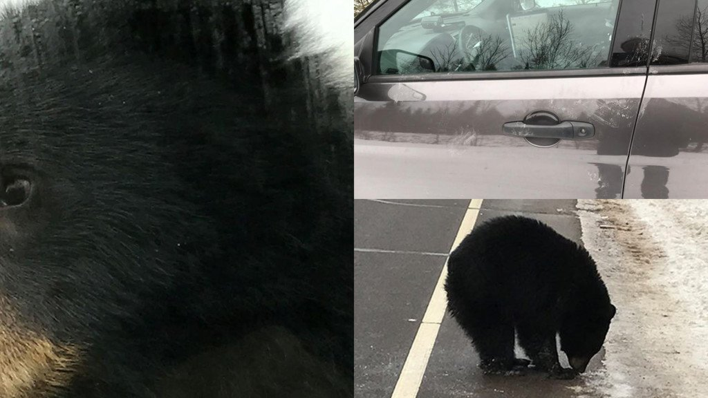 Bear spotted on Wisconsin highway
