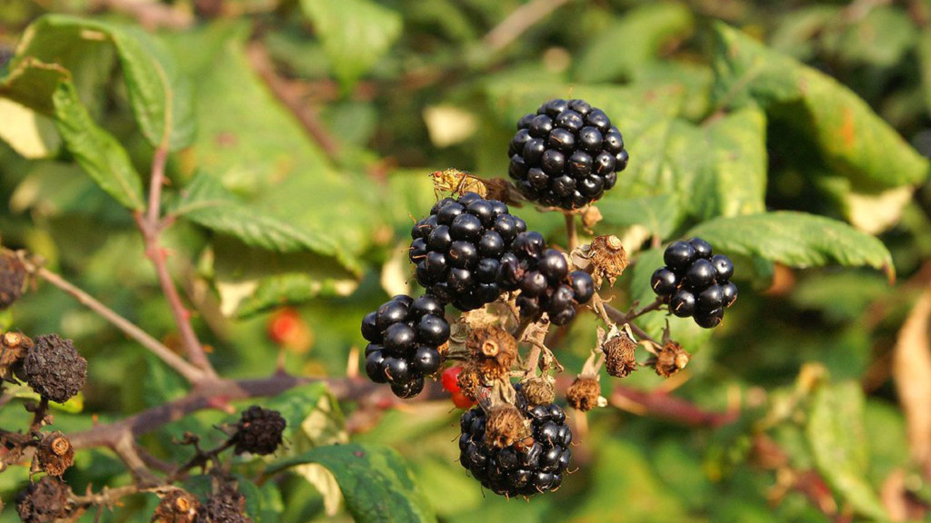 Hepatitis A outbreak tied to berries spreads to Wisconsin