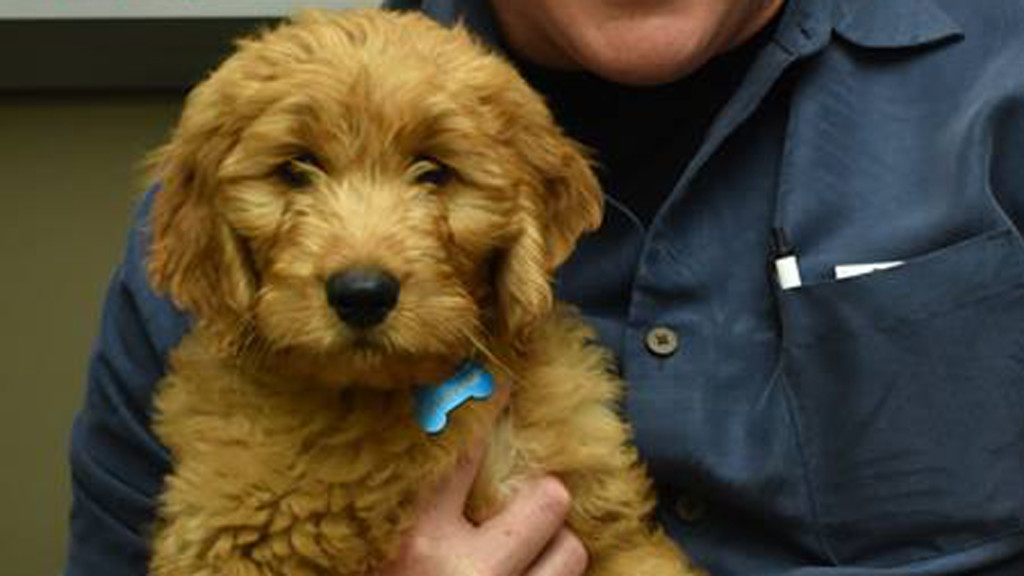 Therapy Goldendoodle brings stress relief to Appleton officers
