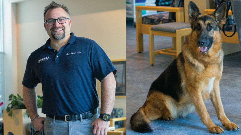 Caring for Canines: Sondel Family Veterinary Clinic