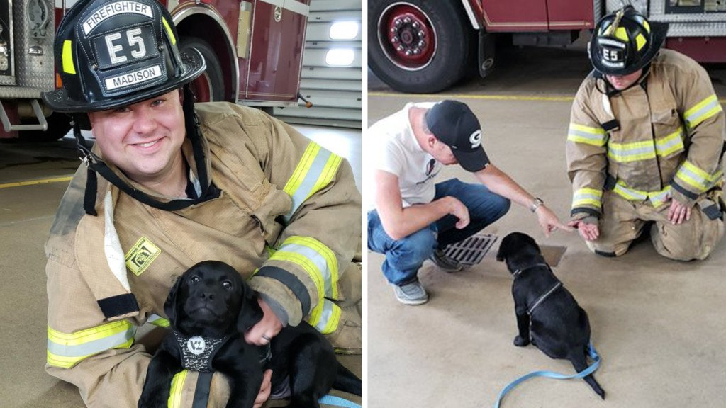 Service puppy-in-training gets lesson at Madison fire station