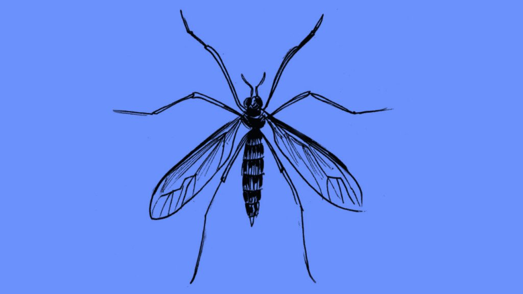 Prevent bugs from bugging you
