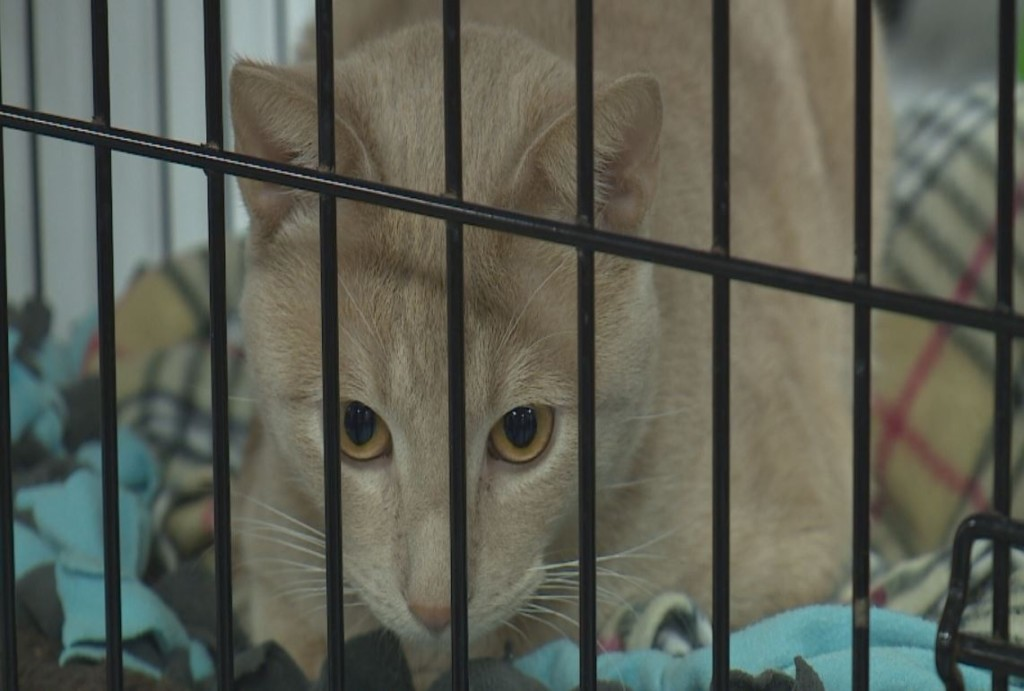 Dane Co. Humane Society offers cat adoption fee cut