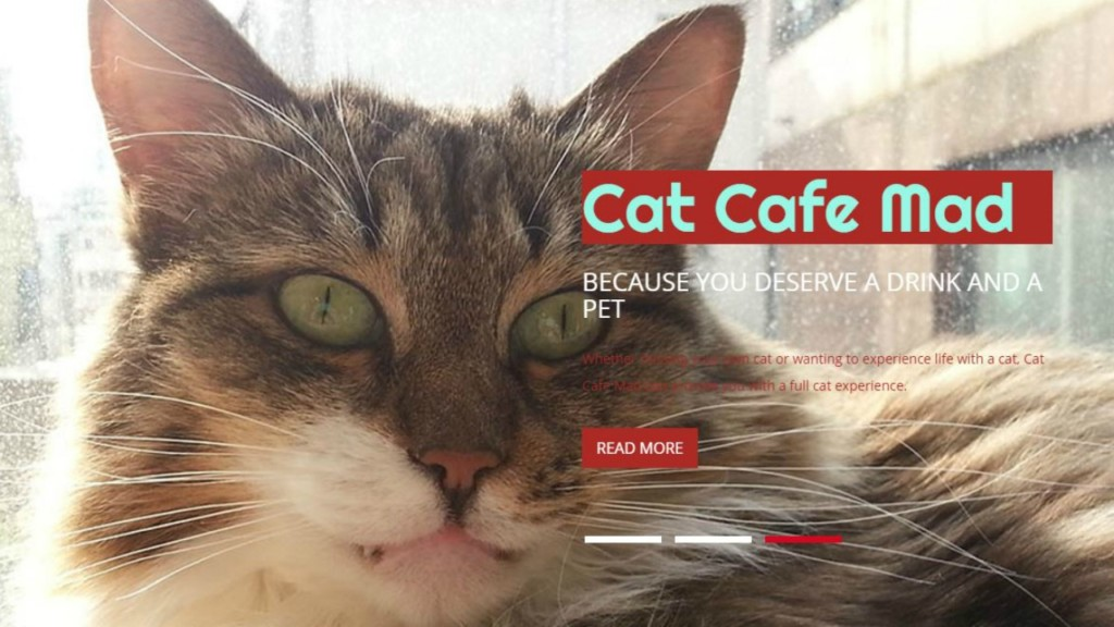 Cat Café Mad in Madison ranked among top in the country