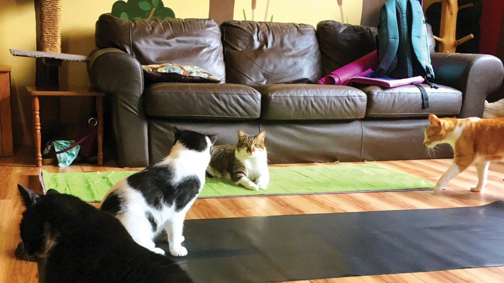Cat Cafe Mad set to close in July