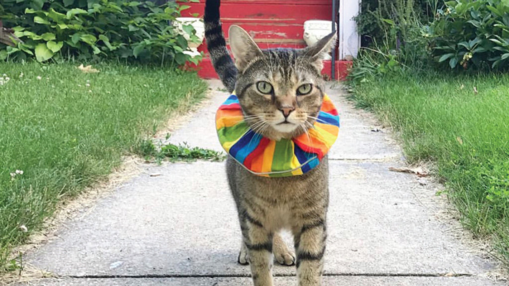 Madison's best social media personality puts a spotlight on cats