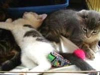 Homes sought for cats abandoned in western Wis.