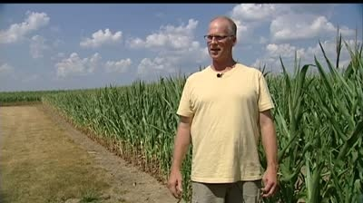 Corn growers' insurance to reduce crop carnage pain