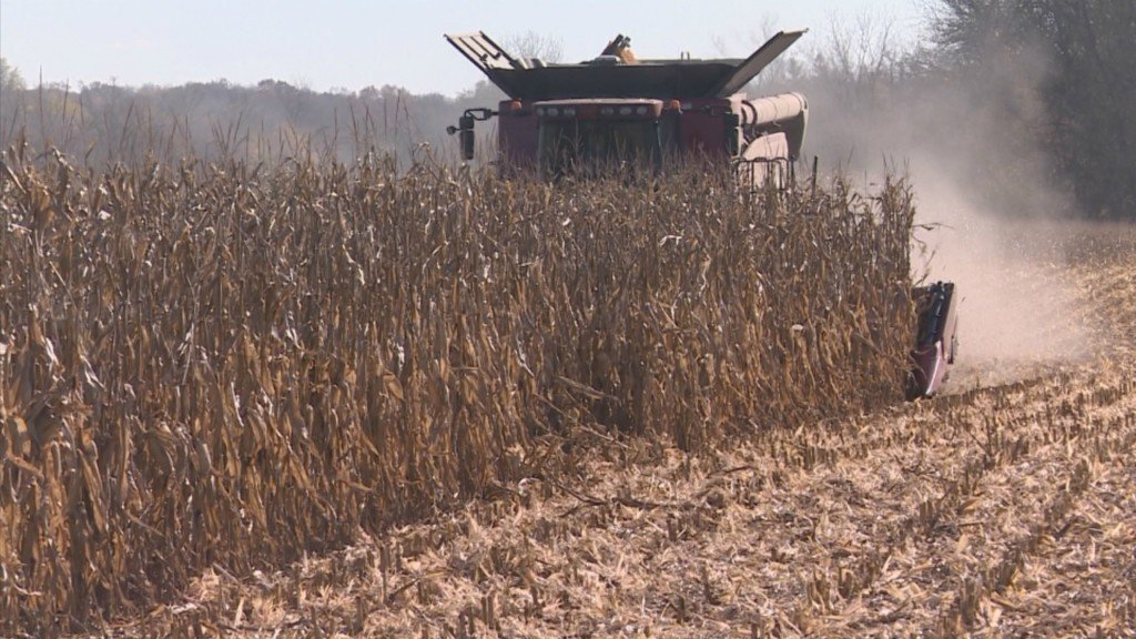 Higher corn yields not necessarily good news for Wisconsin farmers