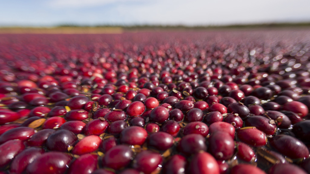 Wisconsin farmers harvest crop amid oversupply issue