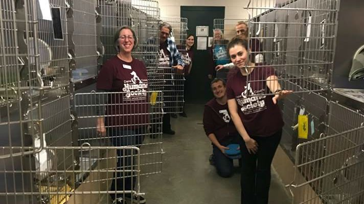 Over 80 cats adopted from humane society