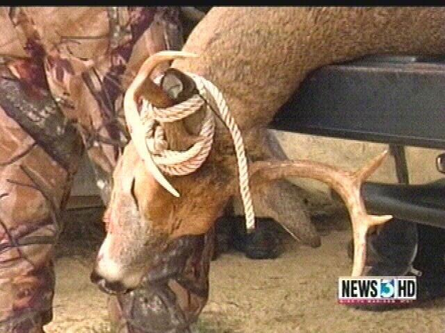 Adams County buck tests positive for CWD