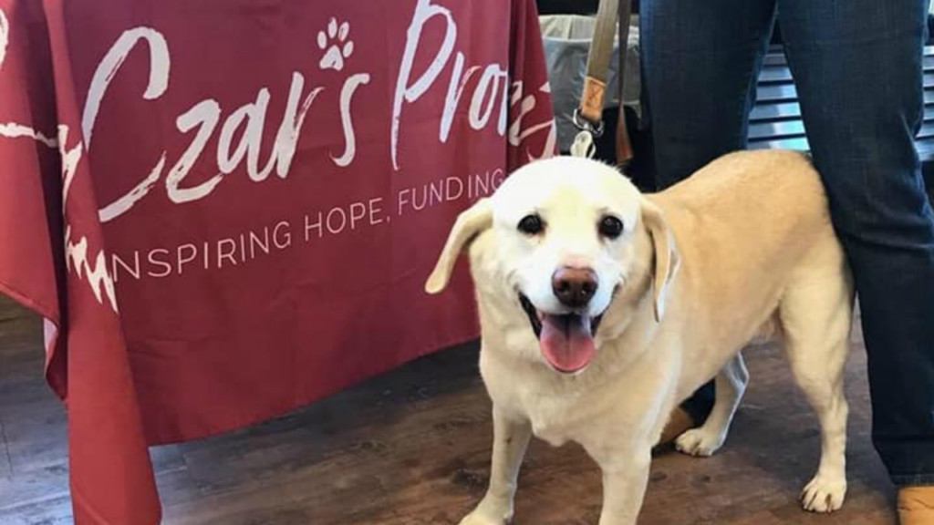 New nonprofit is inspiring hope for humans, companion animals dealing with cancer