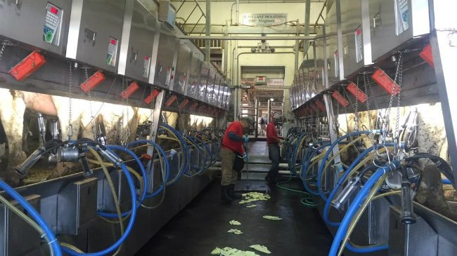 Dozens of dairy farmers without milk buyer as of May 1