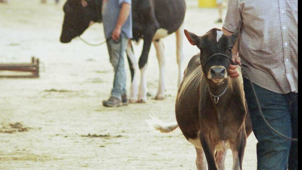 The 53rd Annual World Dairy Expo kicks off in Madison Tuesday