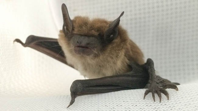 A Wisconsin researcher hopes to use UV light to save bats