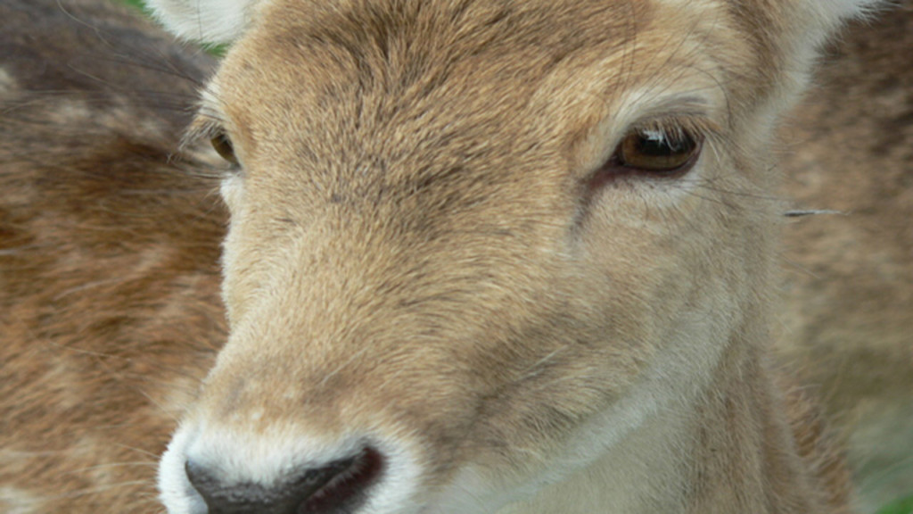 DOT: Watch out for deer darting into road; Don't swerve to miss