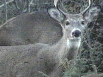 First sign of CWD in Racine Co. deer herd