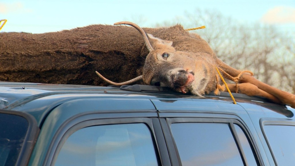 DNR encouraging hunters to test deer for chronic wasting disease