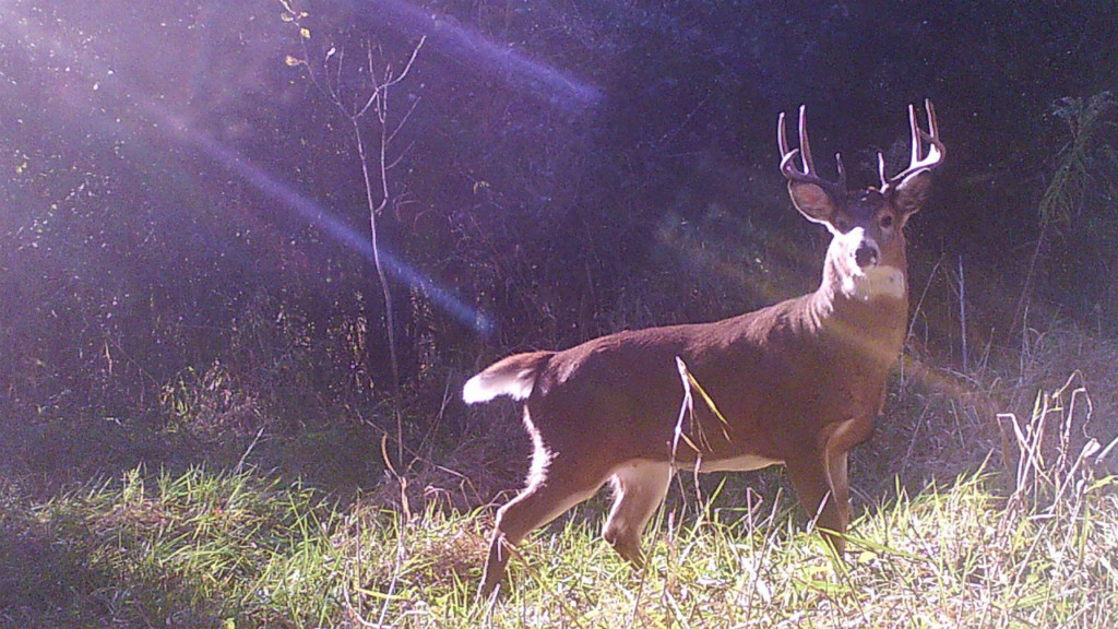 Chronic wasting disease detected in Lincoln County deer