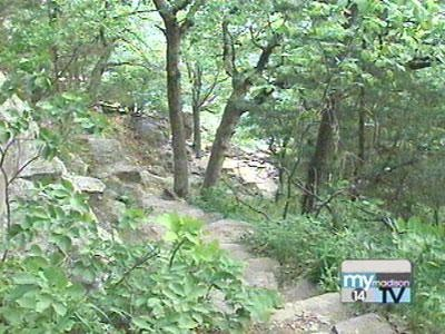 DNR checks state park trees twice a year