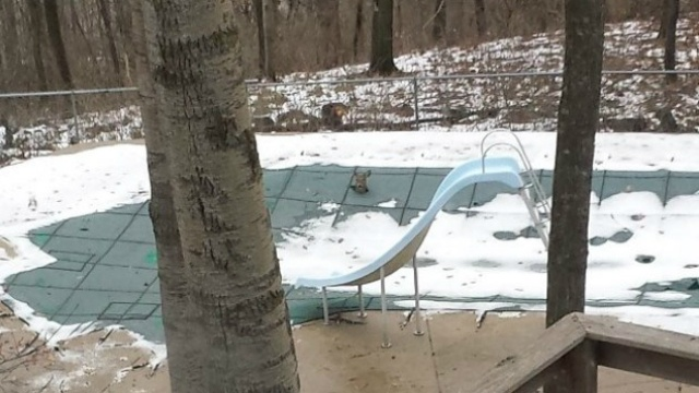 DNR: Deer gets stuck in empty pool, pops head through cover