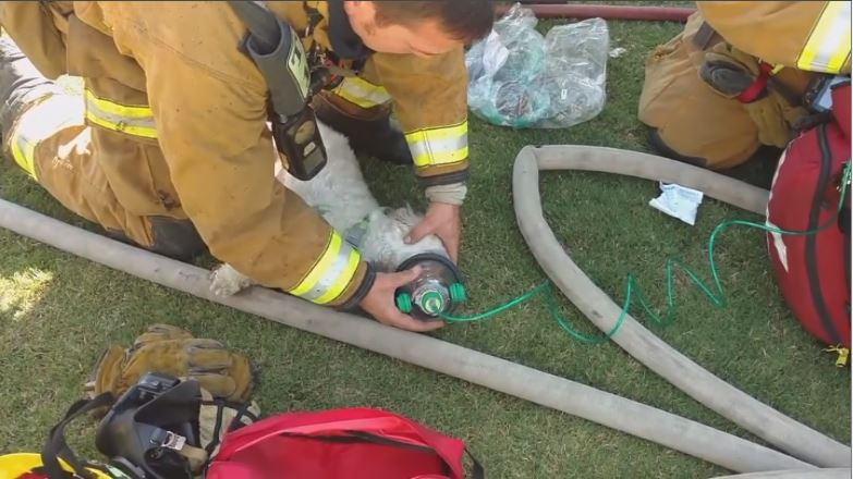 Bill to allow emergency responders to render aid to pets sees support at the capitol