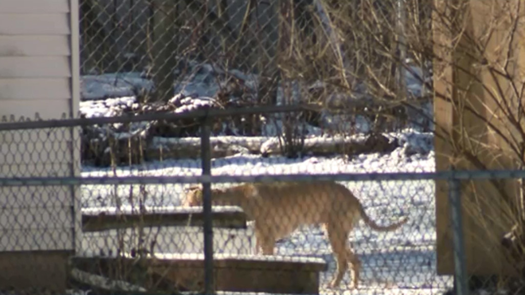 Dog found frozen solid on porch in Ohio amid cold snap