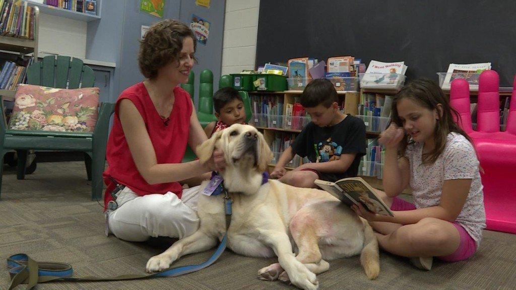 Yellow lab named Gus helps students with reading