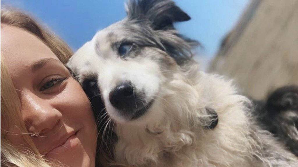 Woman offers $7K reward, hires plane in search of stolen dog