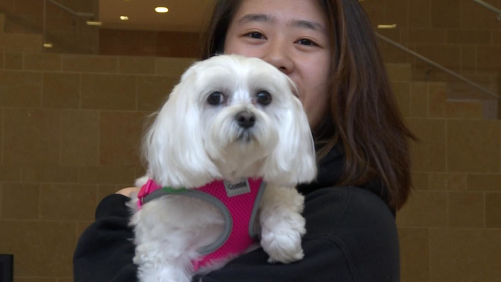 UW-Madison invites dogs to campus to help alleviate student stress during finals