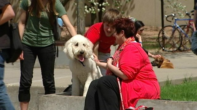 3 local therapy dog organizations in the Madison-area