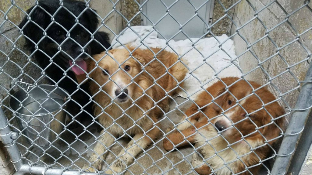 Authorities find 52 dogs inside a home and deem it uninhabitable