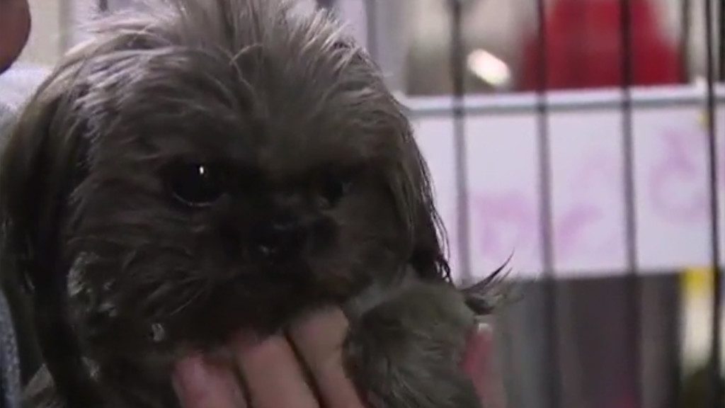Veterinarians warn sweetener Xylitol is growing risk to dogs