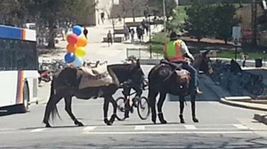 Meandering downtown donkeys promote new social app