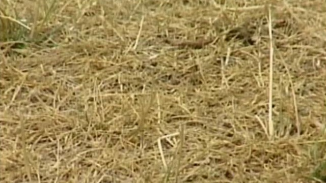 Southern Wis. drought upgraded to severe